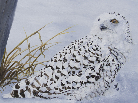 Close up view of snowy owl painting by Johanna Lerwick Wildlife/Nature Artist
