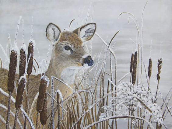 Oil painting of a Whitetail Doe among frosted cattails by a pond.