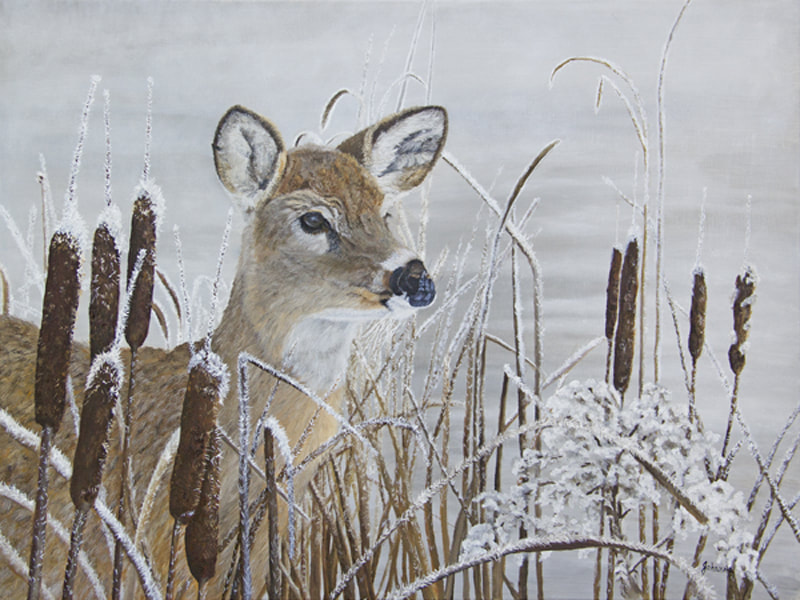 Fine art prints of a Whitetail doe among frosted cattails.
