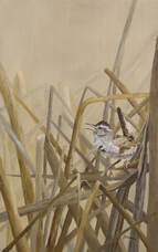 Song Bird Oil Paintings by Johanna Lerwick Wildlife & Nature Artist