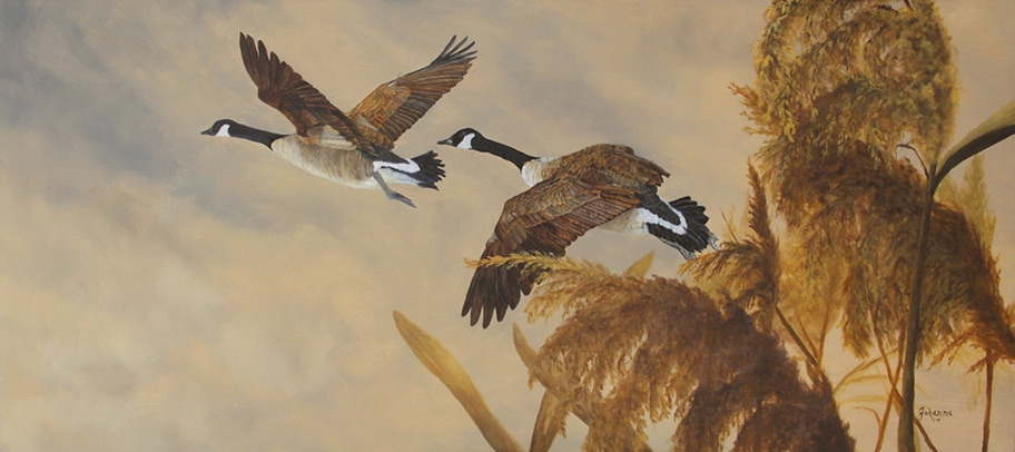 Fine art print of a pair of geese in flight.