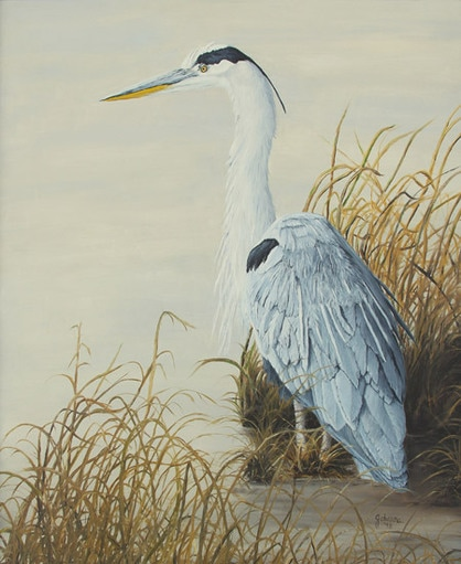 Fine art print of a Great Blue Heron.
