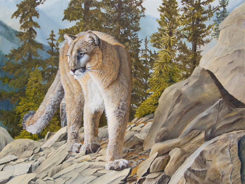 Oil painting of a cougar high in the mountains by Johanna Lerwick Wildlife/Nature Artist
