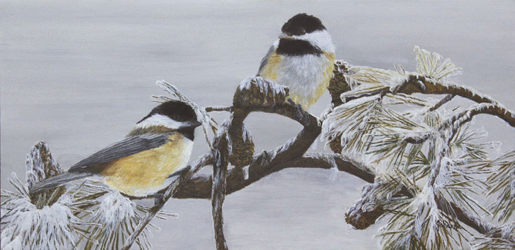 Fine art print of chickadees on an ice covered branch.