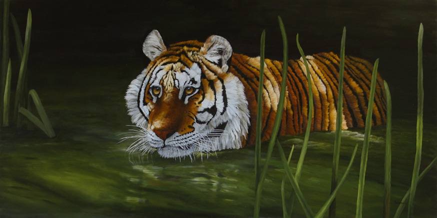 Fine art print of a stalking tiger in the water.