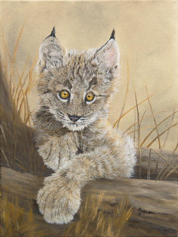 Fine art print of a Canadian lynx kitten.