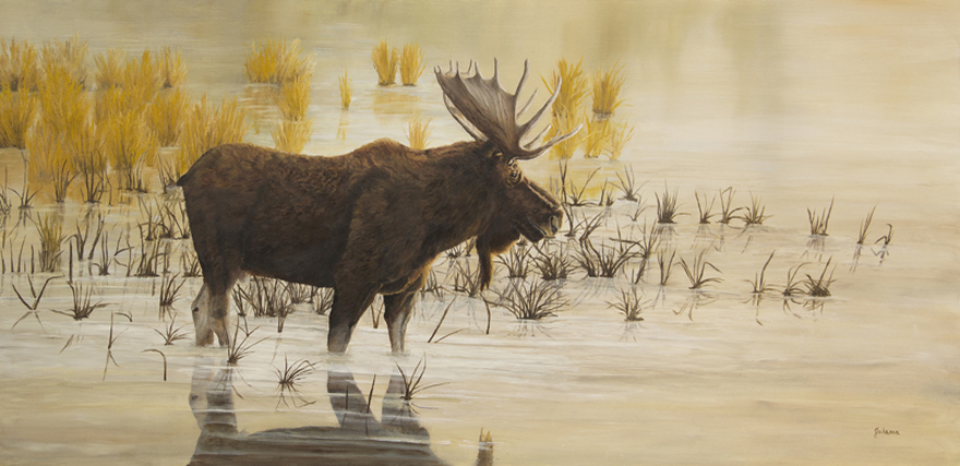 Painting of a bull moose wading in the water.