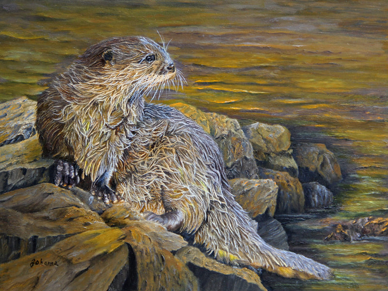 A river otter relaxing on the rocks.