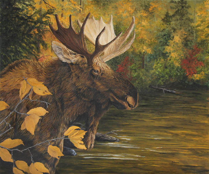 A portrait of a bull moose on the edge of a lake in autumn.