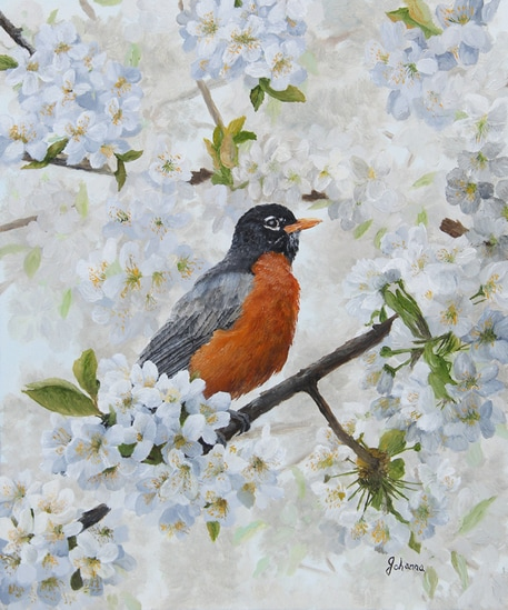 Fine art print of robin sitting among cherry blossoms.