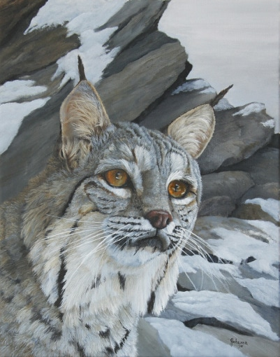 Original oil painting of a bobcat among the rocks.