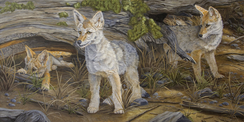 Fine art print of three coyote pups waiting for mom.