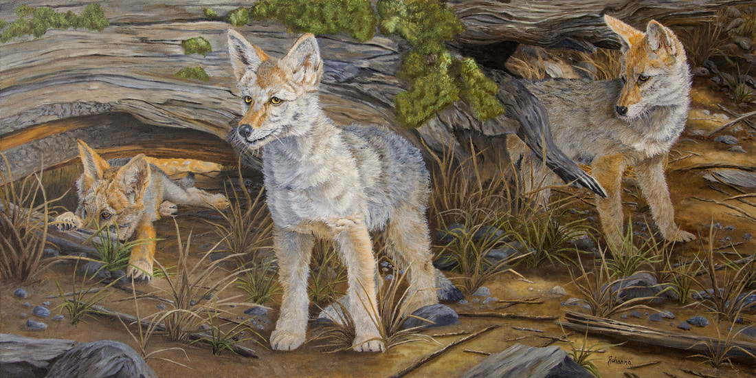 Coyote pups original oil painting by Johanna Lerwick Wildlife & Nature Artist