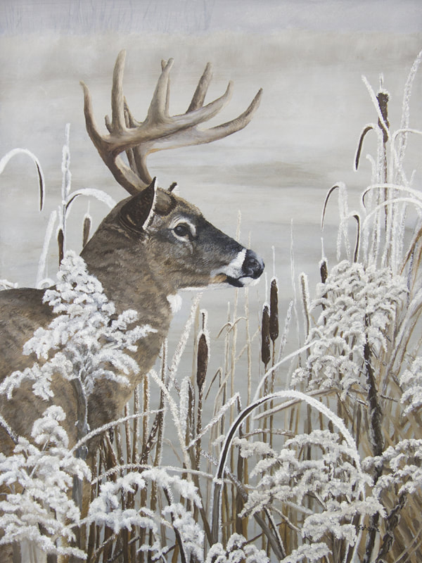 A whitetail buck on a frosty day by the pond.